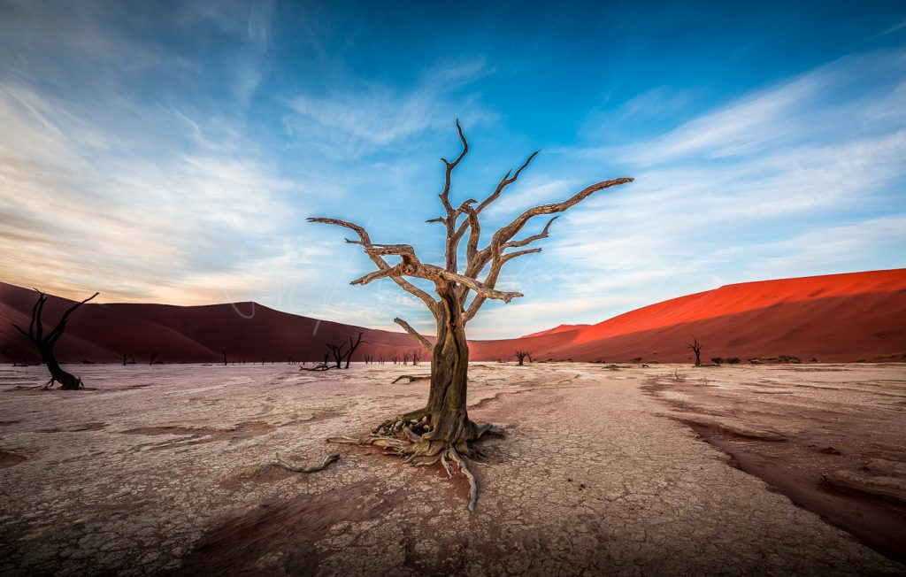 BLOG 2021 (Namibia only)